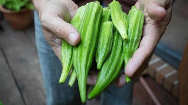 cách trồng đậu bắp trong thùng xốp