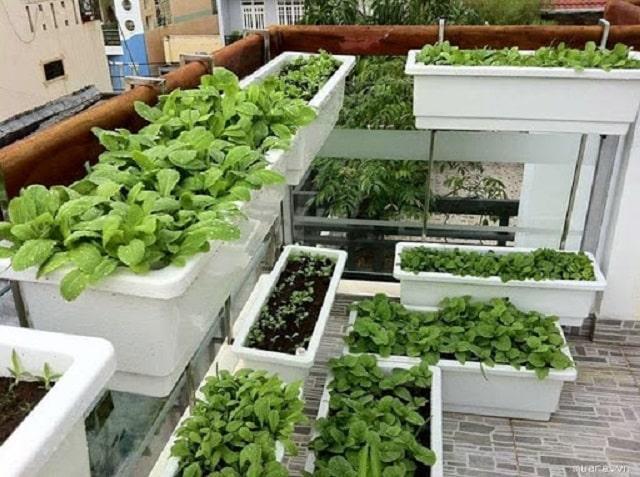 cách trồng rau sạch tại nhà bằng thùng xốp