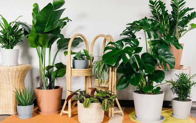 cây trồng trong nhà không cần ánh sáng